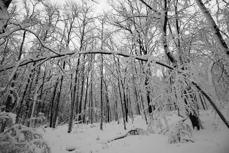 feb-snow-day-bw-07