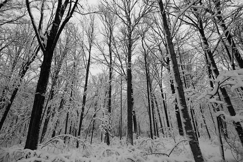 feb-snow-day-bw-01