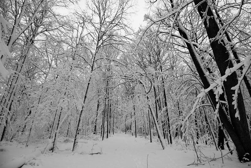 feb-snow-day-bw-03