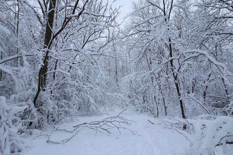 feb-snow-day-16