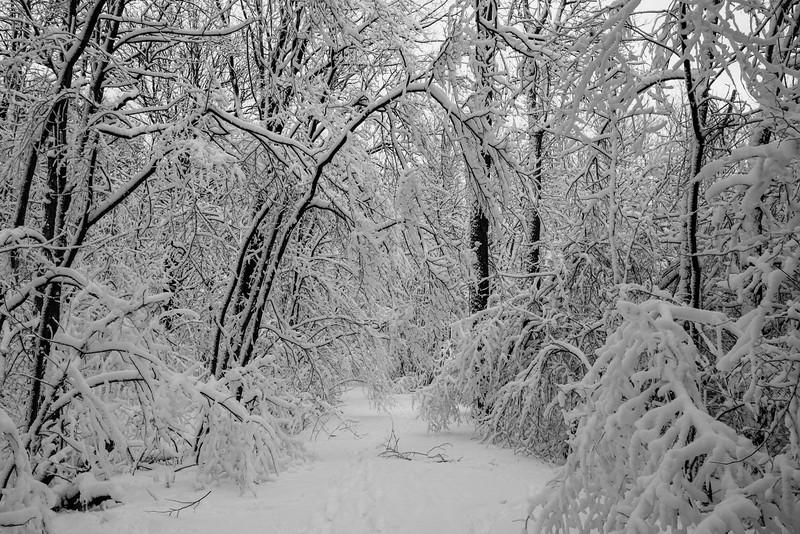 feb-snow-day-bw-18