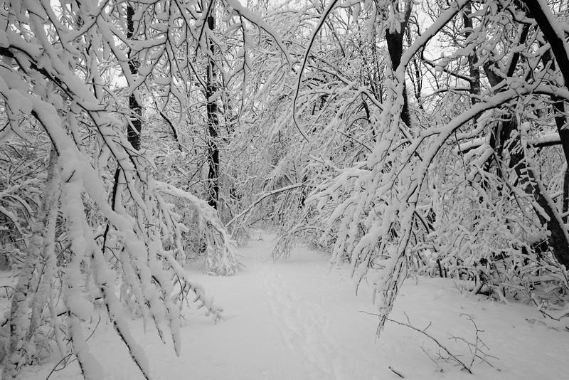 feb-snow-day-bw-12
