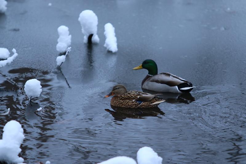 feb-snow-day-13
