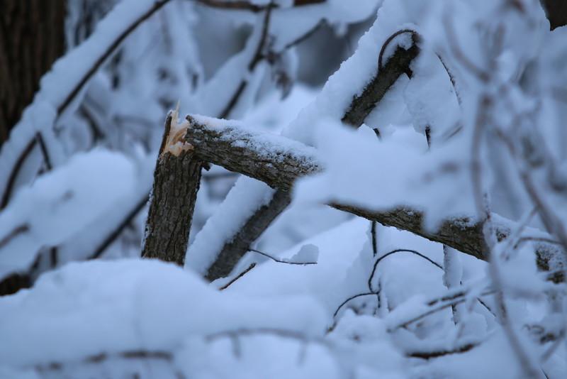 feb-snow-day-15