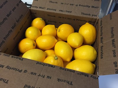 Freshly picked late harvest organic Meyers lemons.