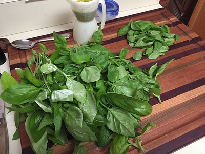4.5 oz basil fresh from the garden. Leave out most stems