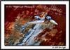 3836_CarRanch0907-RGB2