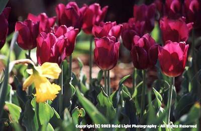 Purpleflower03
