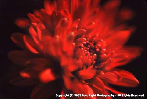FlowerC02