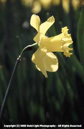 FlowerA03