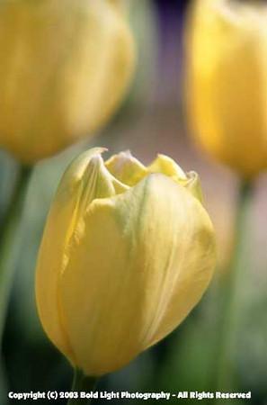 FlowerA01