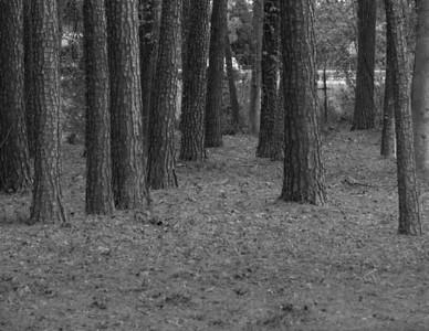 130401_costcotrees--038etc