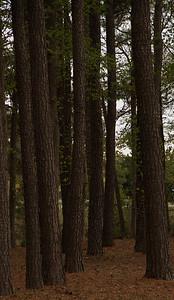 130401_costcotrees--039etc