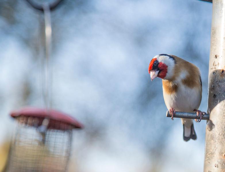 Watch the Birdy 61/365