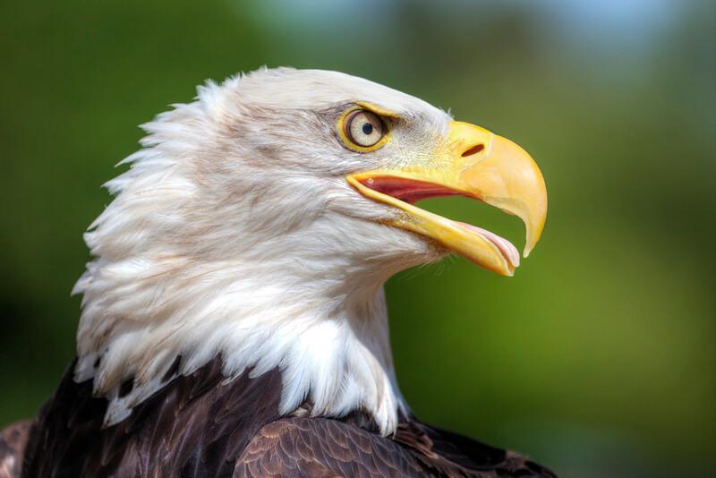 Eagle Eye 200/365