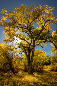Fall colors at Connected Lakes State Park in Grand Junction, Colorado.