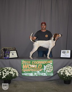 2018 Coonhound World Championship
