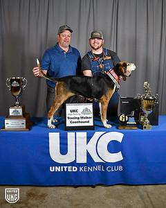 2019 Coonhound World Championship