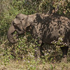 Wild elephant sighting on the highway from Coorg to Mysore