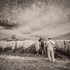 Plowing the Vineyard, St. Emilion, Bordeaux Region, France (infrared)