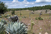 Tarahumara Farm
