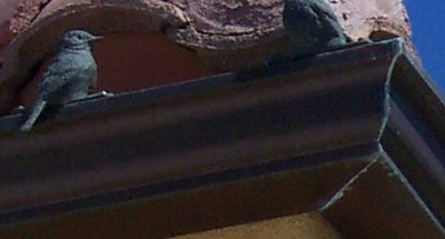 Weathered copper gutters, cast bronze ornamental bird