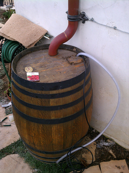 "This is a wine barrel from a Temecula winery that I adapted for use as a rain barrel by adding a overflow, drilling a spigot and inlet hole The customer varnished the oak and painted the bands black. Pretty sweet.<br /> Mr. Culbertson has a great drought tolerant landscape and I am preparing a in depth post about this in the blog portion of my website. To see more of this yard see the link below;<br />  <a href=""http://www.flickr.com/photos/34819925@N04/sets/72157625868728740/show/"">http://www.flickr.com/photos/34819925@N04/sets/72157625868728740/show/</a> <a href=""http://www.rain-watersystems.com/"">http://www.rain-watersystems.com/</a>"