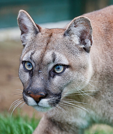 Big Cats_WHF MaidstoneIMG_6214