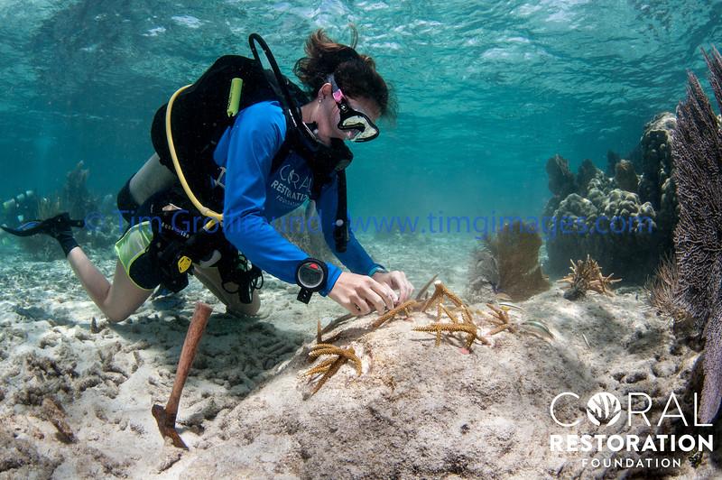 Alert Diver CRFI
