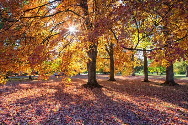 Corbin Park