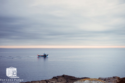 A creel boat heads out near Kirkwall, east of Orkney mainland in the soft creamy-blue light of a gentle summer sunrise.