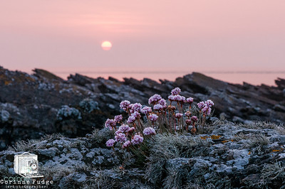 midnight blue pinks mist and a 'midnight' sunset, high summer, orkney 2012