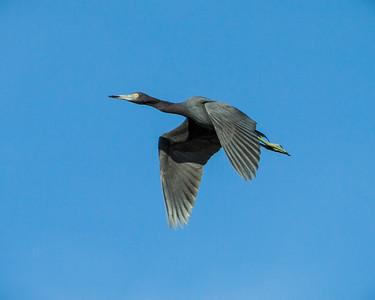 bird in flight-4284