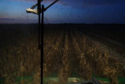 Corn Harvest - Texas Style