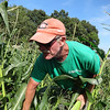 Bob Tobey of Griggs Farm harvests the season's first corn. -- photo by Mary Leach