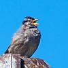 Sparrow9709