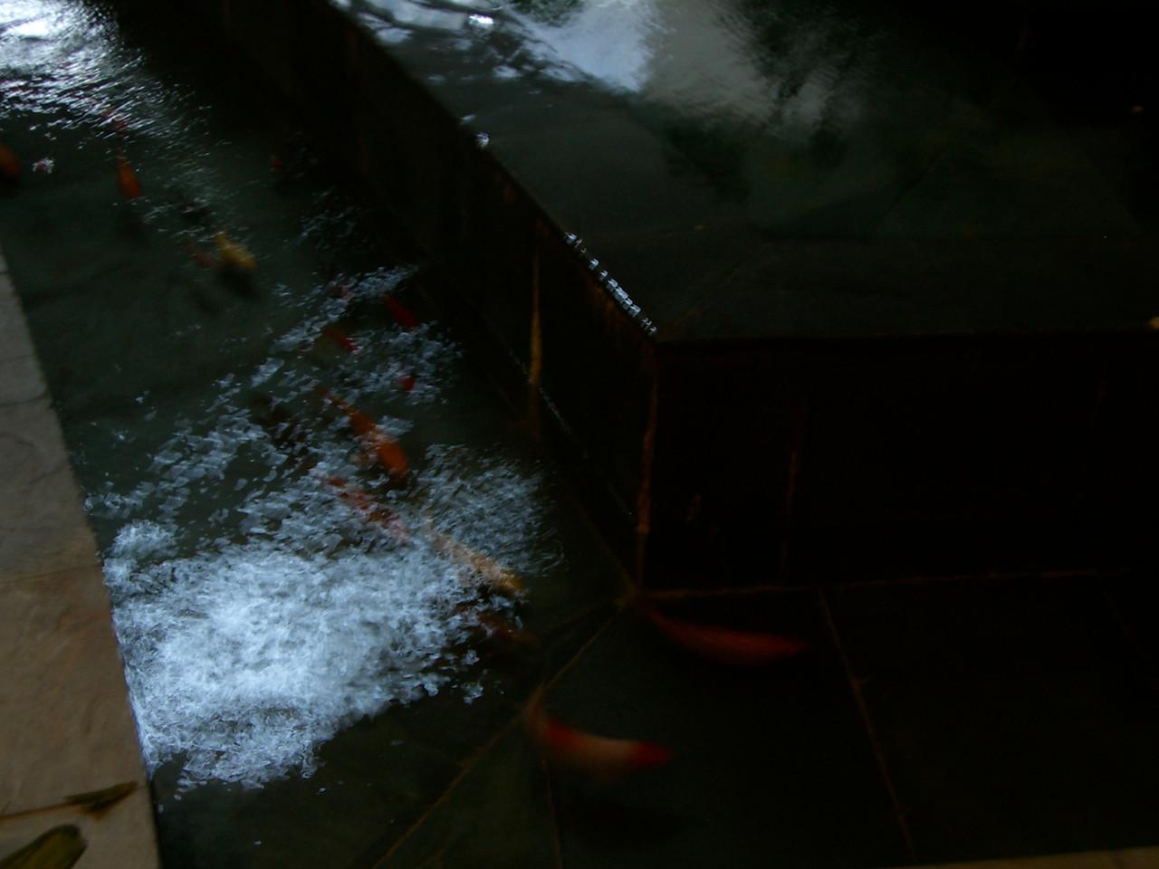 2006 07 15 Sat - Yong Jiang Hotel fountain fishies