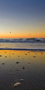 Beach Tide Ant View