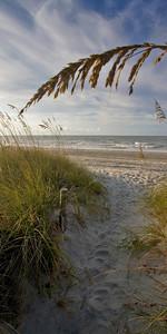 Beach Dunes B