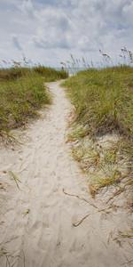 Beach Dunes A