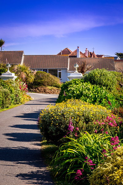 Driveway & Garden