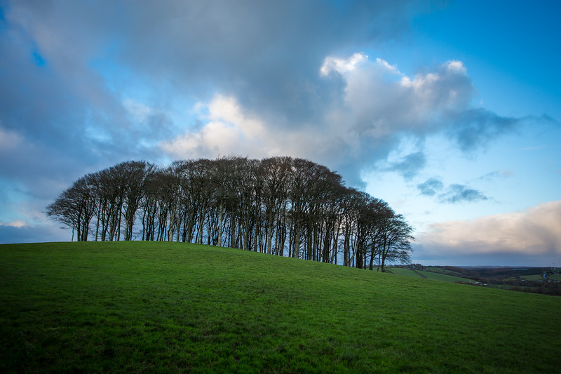 The trees at Broadwoodwidger, Devon