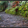 The Path To Glendurgan