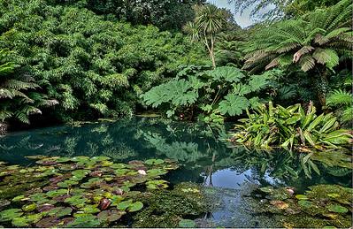Jungle  Gardens