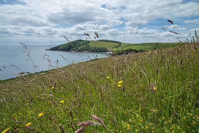 Gribbin Head through the wild flowers