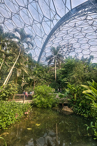 Rain  Forest  Eden  Project
