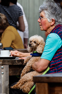 Taking Tea with A Poodle
