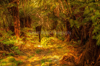 Bush walk to Cathedral Cove