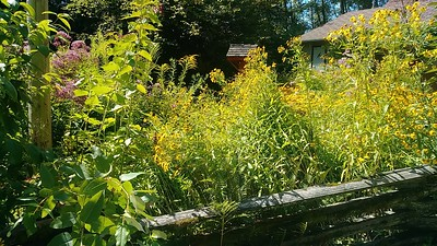 Burnaby Lake-Butterfly Garden