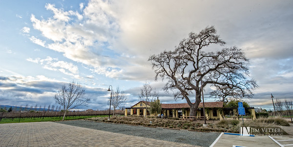 0003_LasPositasVineyards JVP